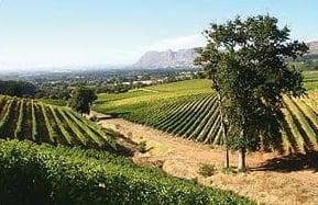pen_winefarm.jpg
