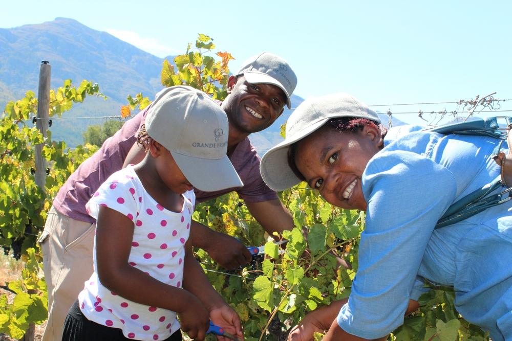 Family grape picking