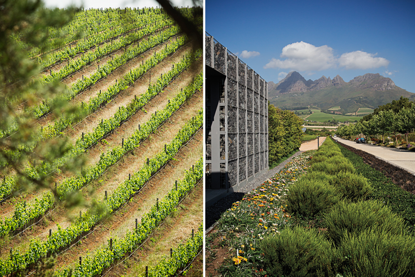 Left: A bird's eye view. Right: Cavalli contributes towards the Botanic Biosphere of the Cape