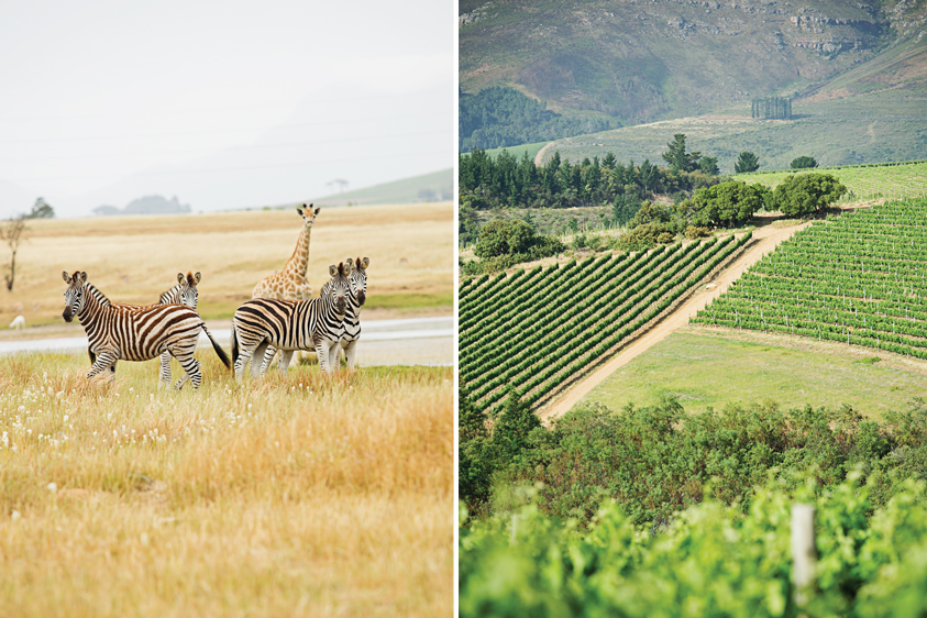 Left: The game drive at Villiera won't disappoint. Right: Now that's what we call a view