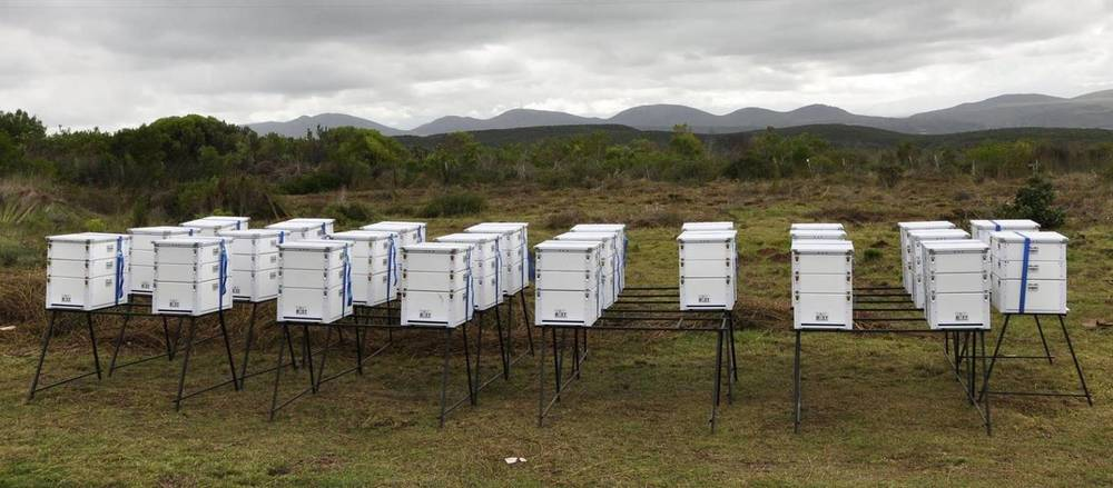 Framework for a thriving bee population