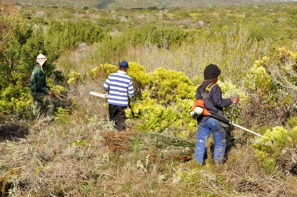 Clearing a site for new hives, and preparing a fire break