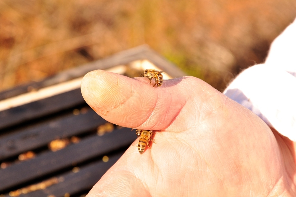 Farmers can purchase the Best Beehive System to make their own honey