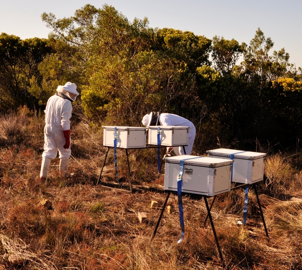 BeePak is reinventing the traditional beehive