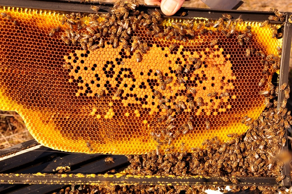 Producing honeycomb from the BeePak hives