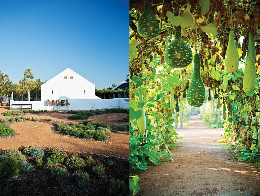 Left: The pathways here, when seen from the air, spell out the word Babylonstoren. Right: Speckled swan gourds and calabash