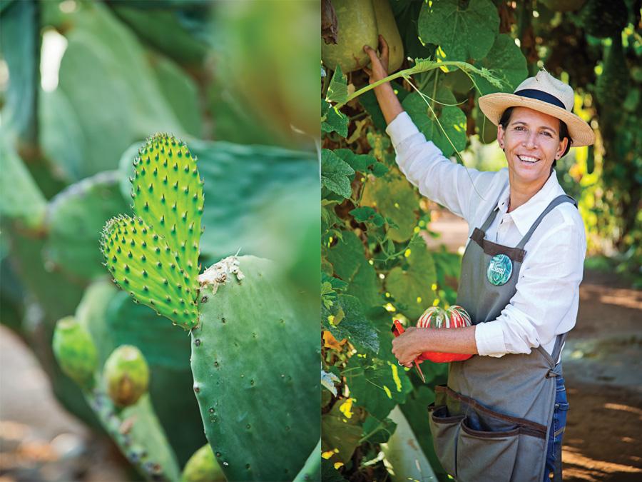 Left: Prickly pears, a fruit worth bleeding for. Right: Liesl holds an orange Turk's turbin pumpkin