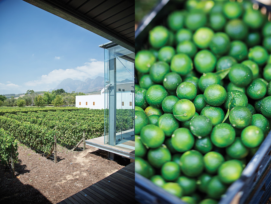 Left: The view from the tasting room. Right: Freshly-picked limes