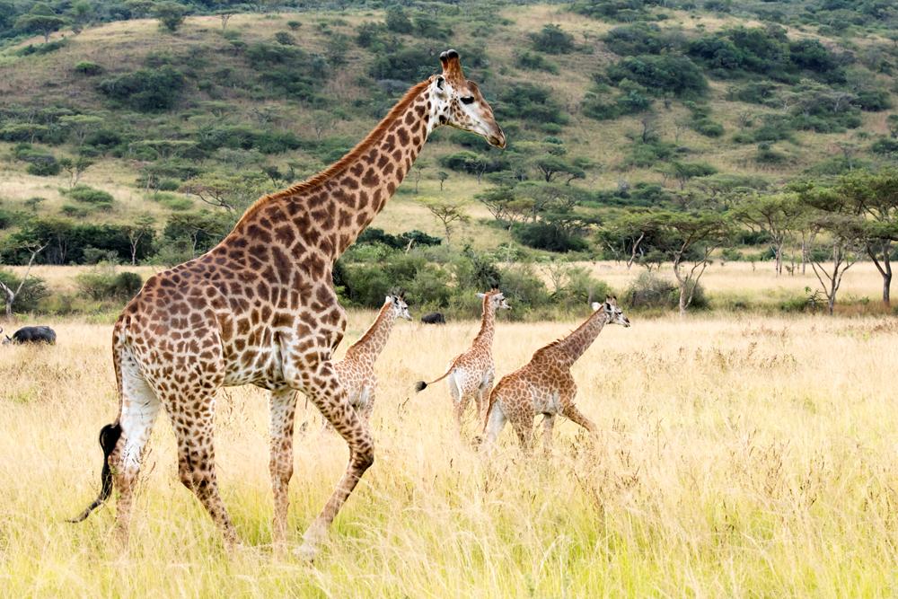 Karkloof Safari Spa