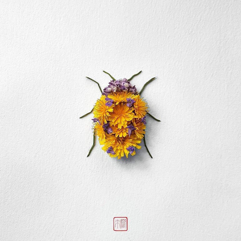 natura-3.jpg