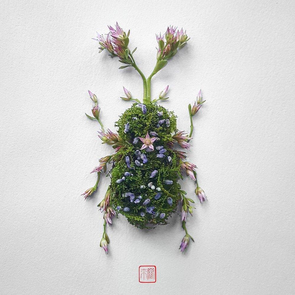 natura-2.jpg