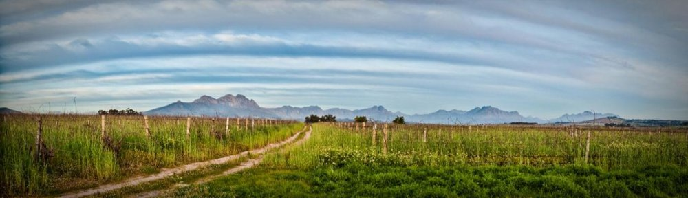 Villiera - Vista Vineyards-1.jpg