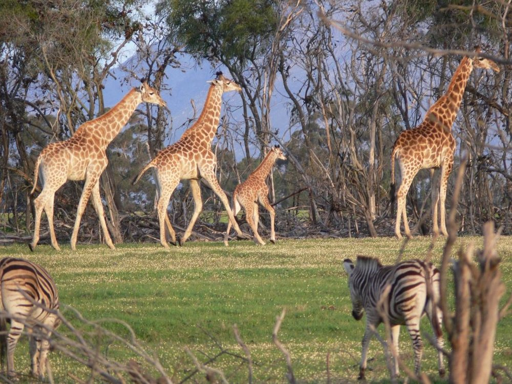 Villiera - Wildlife Sanctuary Image 1.jpg