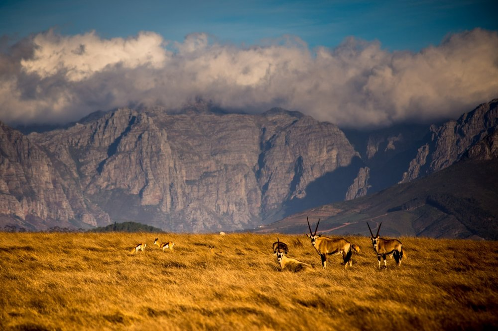 Villiera - Wildlife Sanctuary Image 2.jpg