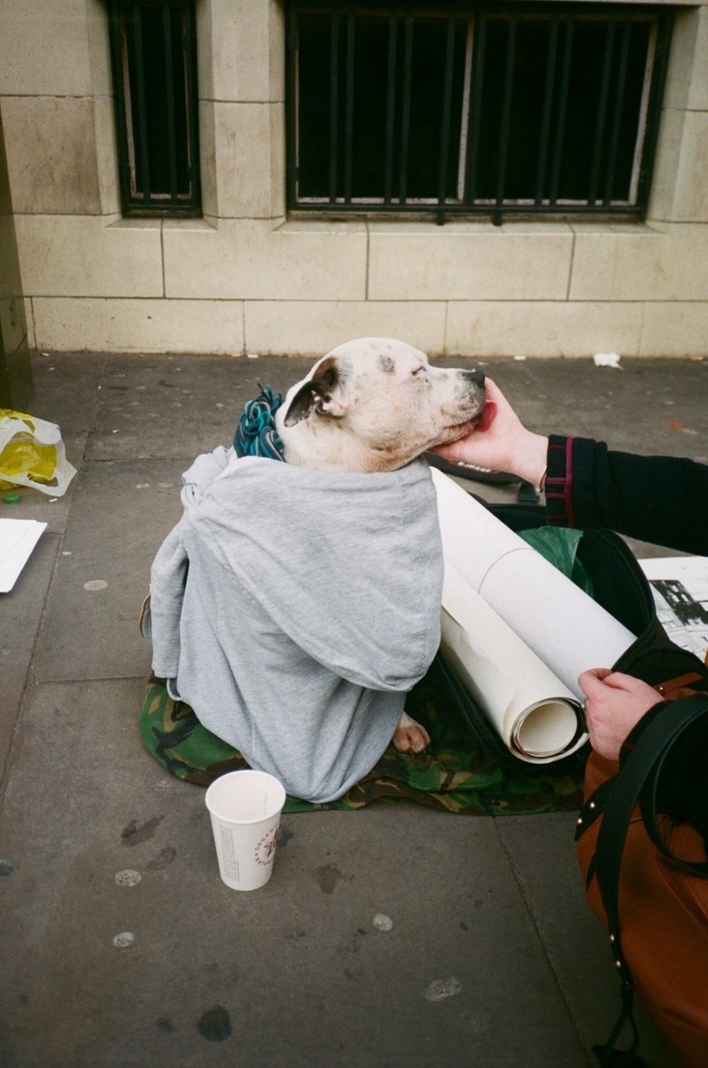 George the dog, East London 2017