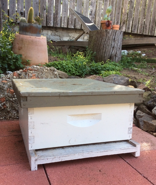 We are hoping to catch a swarm with this box placed in my Sunset neighborhood backyard.