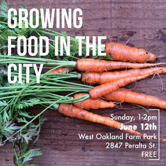 Growing Food in the City workshop