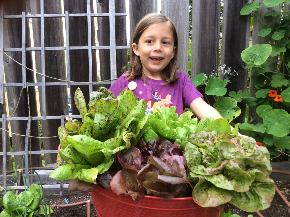 Lyra happily helping me harvest the lettuce.