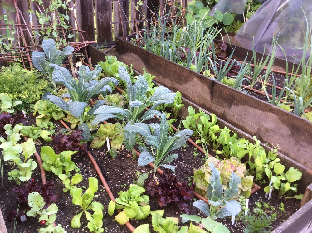 There's a lot to eat in the winter garden