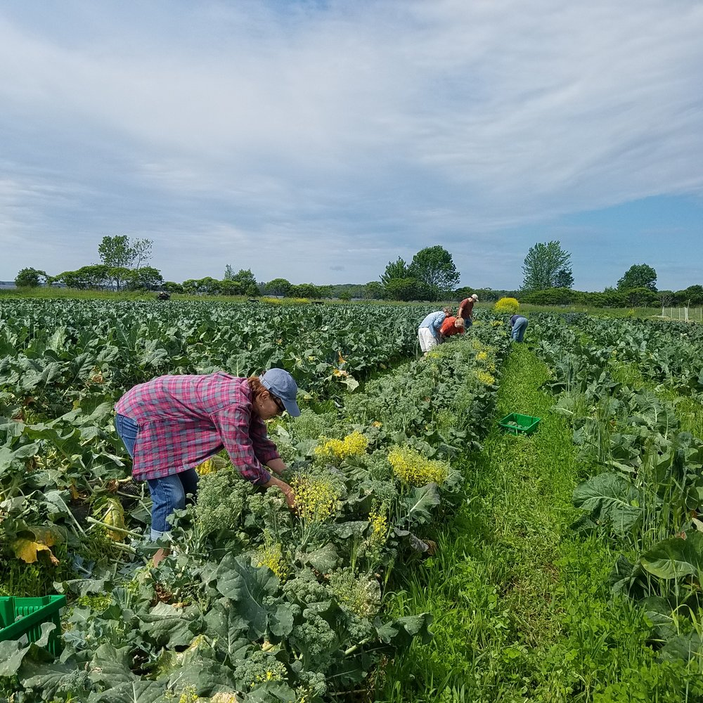 """""""It's wonderful to see excess produce from our farm being harvested for those in need."""" -Nate Drummond, Six River Farm"""