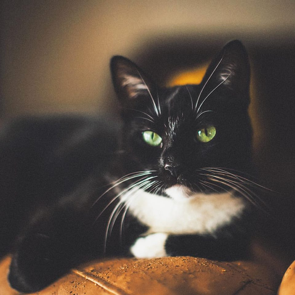 I'm a crazy cat lady. My adorable tuxedo cat is named Kitty Johnson.