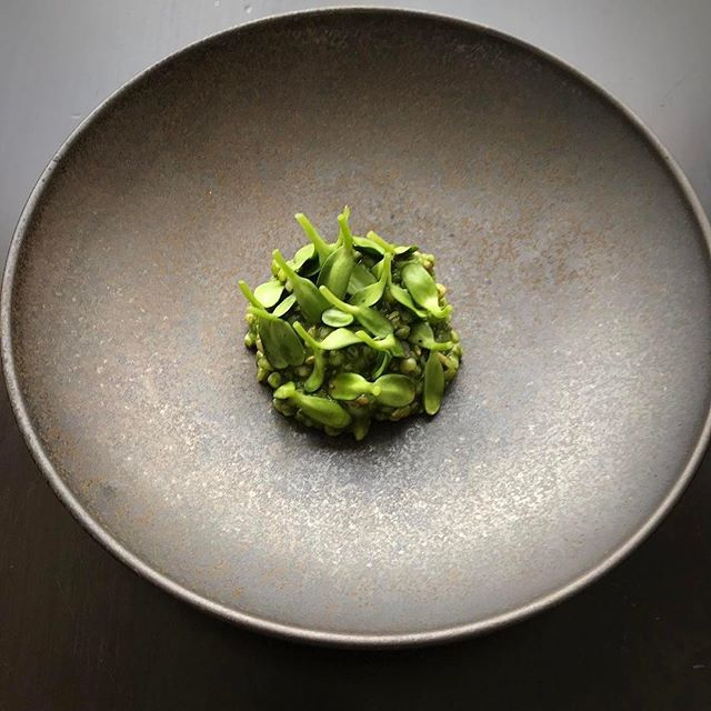 #3courses: 1 of 3 Back to #sweethome #Chicago and our friends at @acadiachicago for some (properly proportioned) Michelin #comfortfood! #foodie #bucketlist #luxurytravel #🥗: @acadiachicago ・・・ buckwheat groats, spinach, sunflower sprouts and seeds, lemon verbena #michelinrestaurant #twostarmichelin #twostars #chefsofinstagram #foodporn #tastingmenu #acadiachicago #foodstagram #staffcanteen #aaafivediamond #vegetarian #butimnotavegetarian #michelininspectors #thebestchefproject #thebestchefawards #jbf #jamesbeardfoundation #soignefood