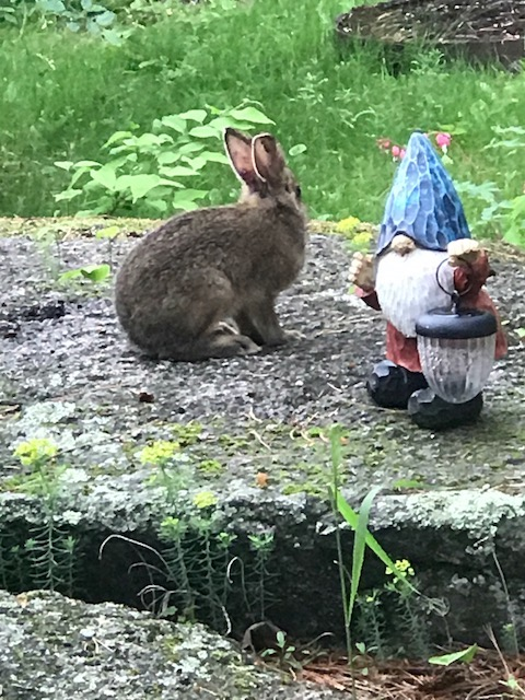 Has nothing to do with fishing, but Cheryl thought it was so cute... A baby bunny listening to his friend, the gnome...