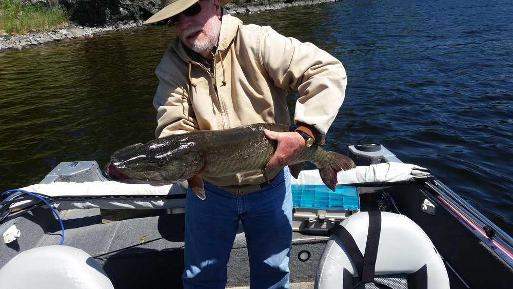 Charlie's 42 inch Muskie; look at the girth!  It was a good day!