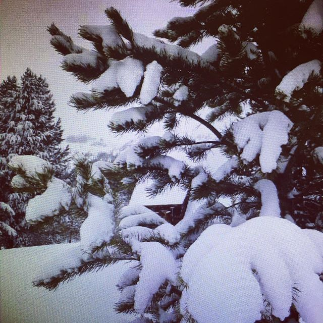It is snowing near us!  Flooding near us as well!  Great time to make sure you have some Whey2Go for some quality nutrition to see you through. Always keep a case in your vehicle. #behealthy #eathealthy #travel #staysafe #sacramentosheriff #proteinshake #policefitness #leoowned #lawenforcement #firefighter #whey2Go #elkgrove #elkgrovepd #safetravels #healthyfood #beprepared #preparedness