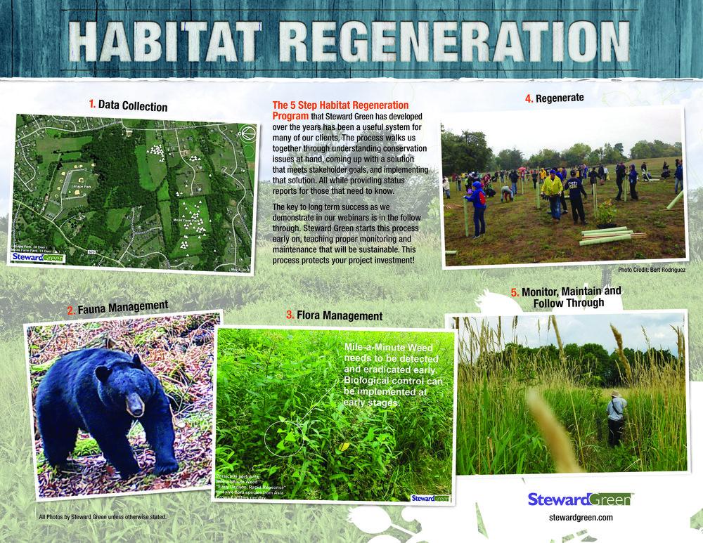 StewardGreen_Habitat Regeneration BrochureFinal_V2-02 (1).jpg