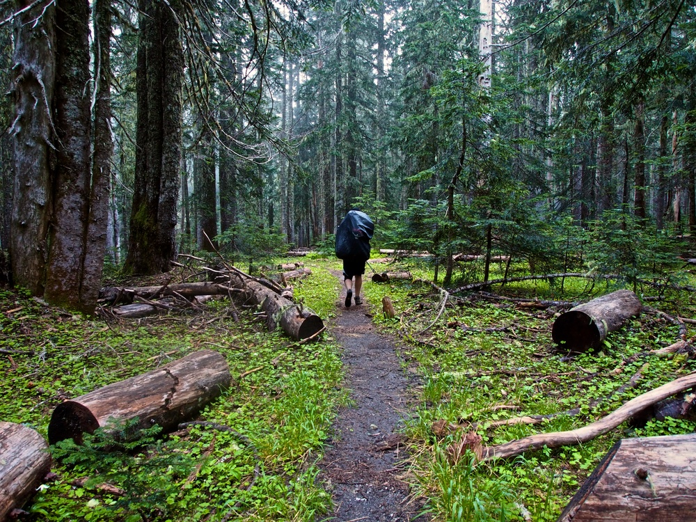 The first three miles of the trail were through old-growth forests.