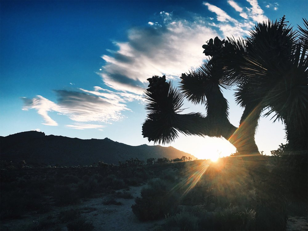 Beautiful sights in the desert.