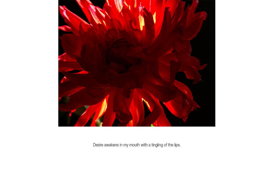 Desire-awakens_01.jpg