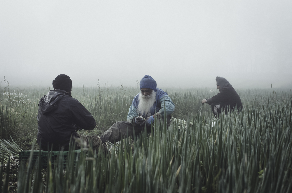 Indianworkers-28.jpg