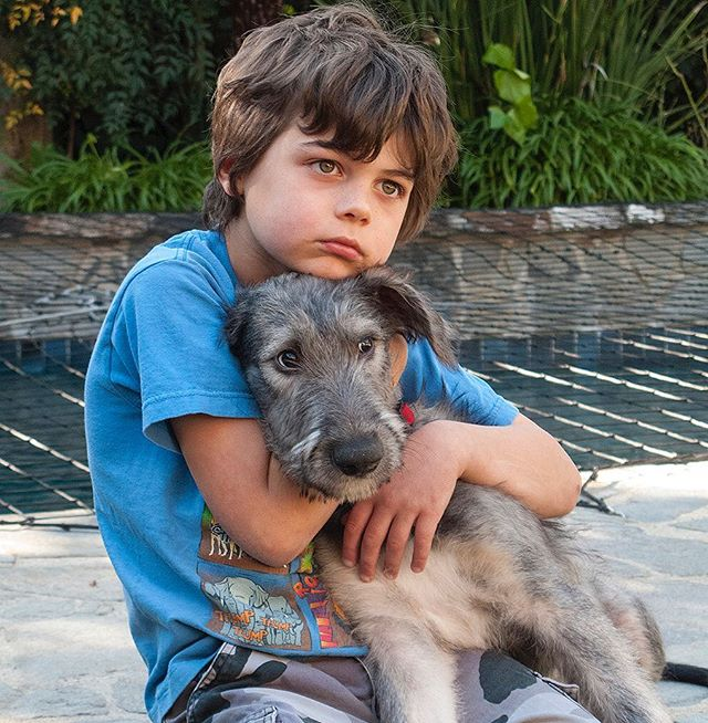 "We lost our sweet Irish Wolfhound giant Wolfie ""Big Boy"" a few days ago. Maybe a heart attack. 😢 we are grieving, he was so sweet. I lost my buddy. Here is Wolfie with our son when they were both little😓  Good Bye Wolfie Now you can close your sweet amber eyes Wolfie… is OK… is OK Big Boy.  With your long penetrating shy face and long tail, you came to our home curled in a bundle of blanket. For almost eight years your presence in our lives changed us immediately for your soulful gaze could penetrate deep into our souls.  Each single day your serene and tranquil personality reminded us to slow down, to enjoy the moment and to cherish those who we love.  Each time sadness crept around, you were the first one to know it, the first one to cheer us up and the last one to leave our side.  Now you can close your sweet amber eyes Wolfie… is OK… is OK Big Boy.  Each occasion our laugh & music bounced around the kitchen, pass the walls to the halls, into our rooms and beyond your bark and howl would approve it like a joyful kid.  Each morning your flat ears flapped around as you ran your tall large frame towards us, then placed your wet nose on our faces. You were not much of a slobber or a kisser but abundance of love came out of you.  Now you can close your sweet amber eyes Wolfie… is OK… is OK Big Boy.  We are going to miss you buddy. You were our own Han Solo and Chewbacca... you were our best compañero.  Gallop high into Dog's heaven but just don't look back now… just wait and sprawl your four paws in Paradise… don't look back yet, wait for our tears to dry.  Manuello Paganelli © May 17, 2018  #irishwolfhound #irishwolfhound.insta #irishwolfhoundpuppy #leicam10 #losangelesphotographer"