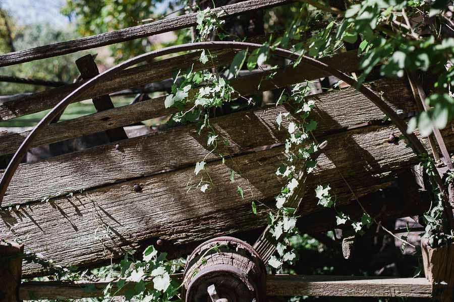 Viejo Carruaje cubierto de vegetación