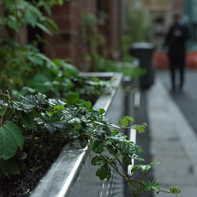 Green Your Laneway