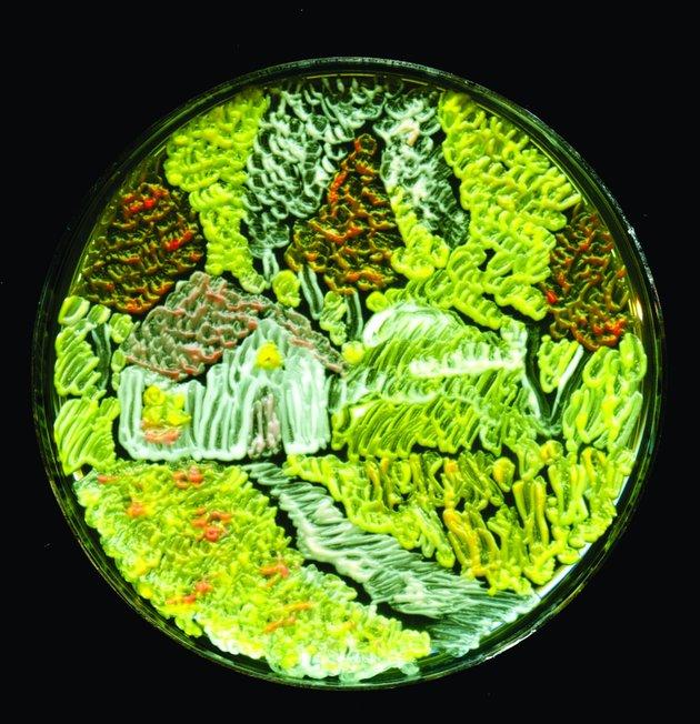 """Terzo classificato: Maria Eugenia Inda, """"La stagione del raccolto,"""" composto di lievito Saccharomyces cerevisiae."""