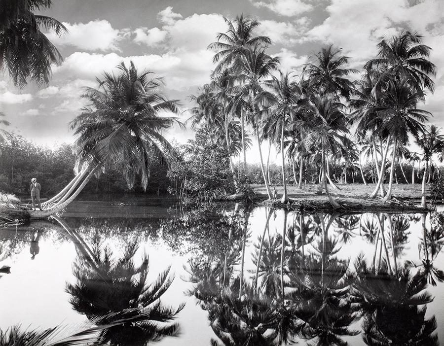 Palme da cocco a Porto Rico, 1924\CHARLES MARTIN, NATGEO CREATIVE