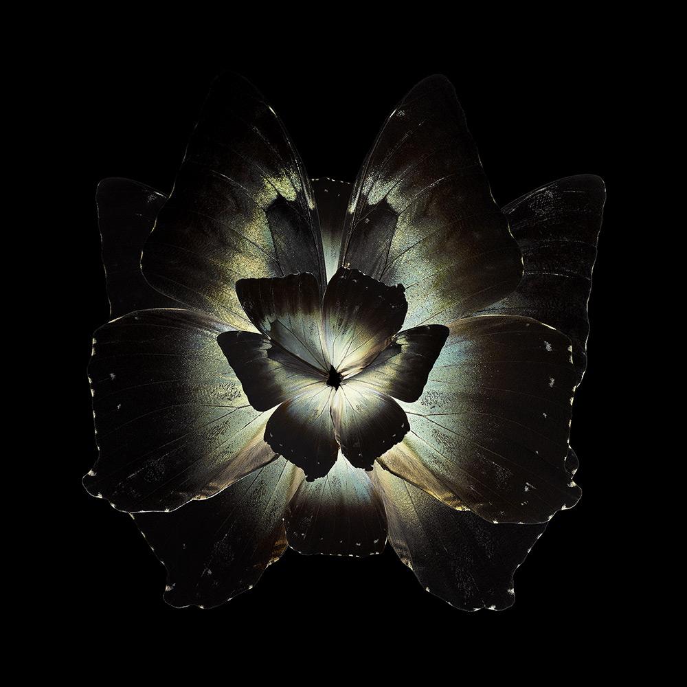 Mimesis – Tradescantia Ganymedia, 2012. Chromogenic print