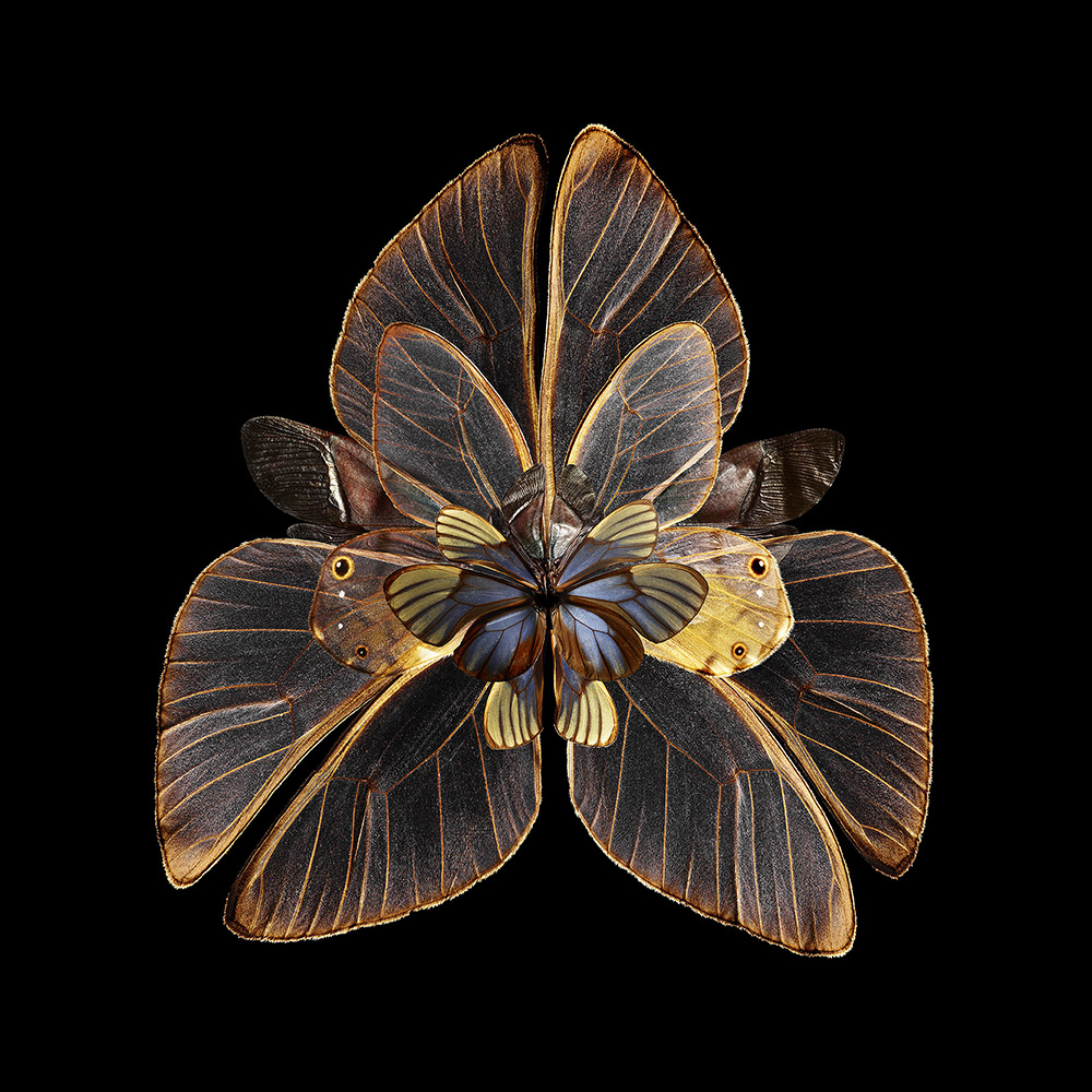 Mimesis – Lubhyati Solitudinis, 2014. Chromogenic print