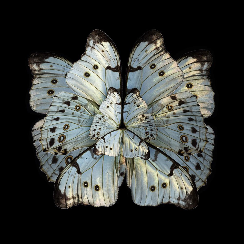 Mimesis – Hibiscus Trinium, 2012. Chromogenic print