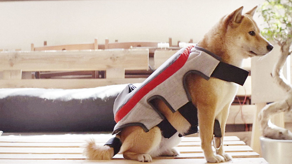 """posting tail"" vestito per cani.jpg"