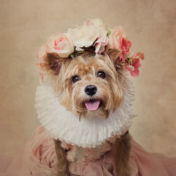tammy-swarek-foto-cani.jpg