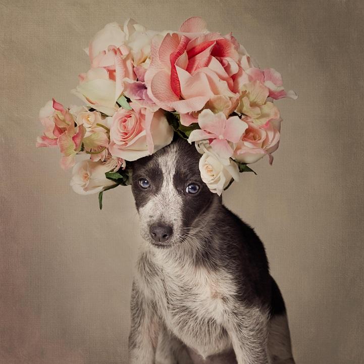 tammy-swarek-fotografie-cani-abbandonati-02.jpg