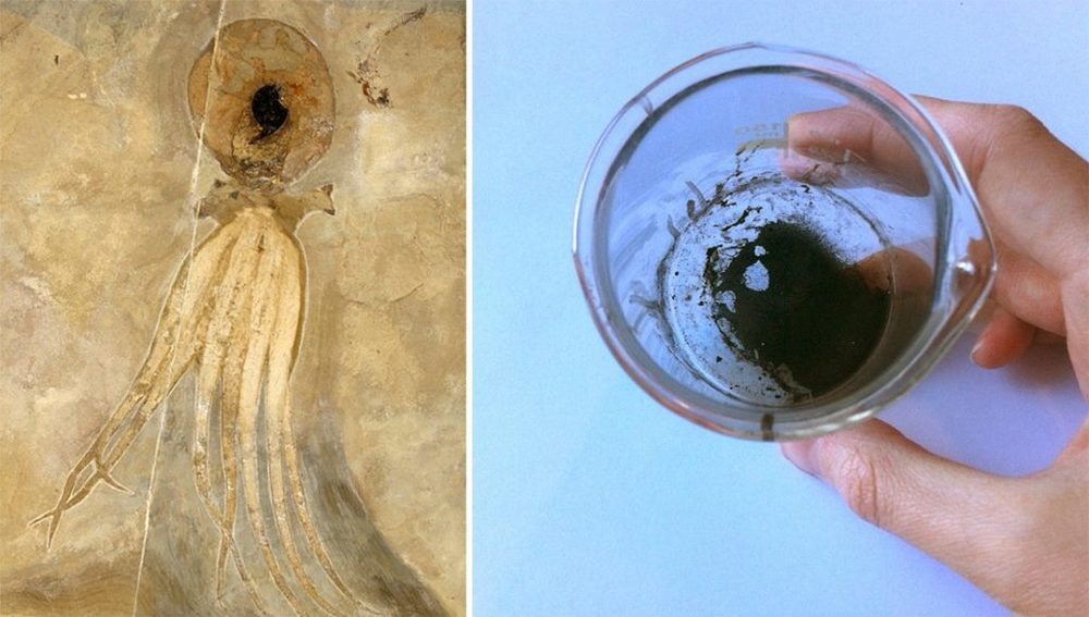 Photo del fossile sulla sinistra by Hans Arne Nakrem, photo della polvere d'inchiostro sulla destra by Esther van Hulsen.