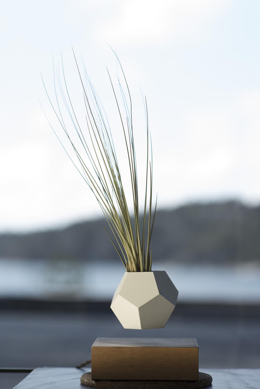 Conosciuto Lyfe, i nuovi vasi da fiori magnetizzati che permettono al tuo  SU37