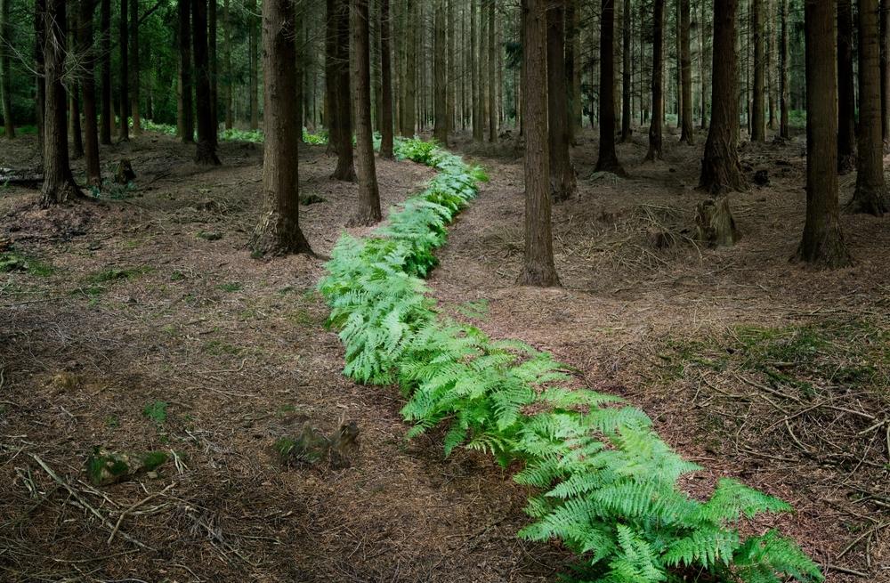 ellie-davies-wood-photos.jpg