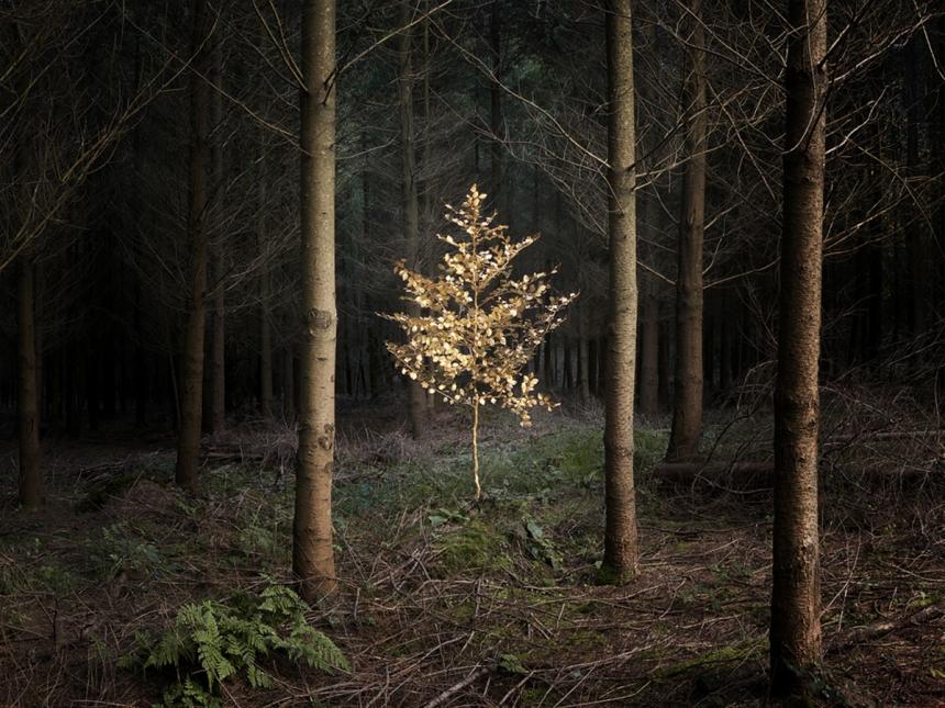 ellie-davies-wood-photos-02.jpg