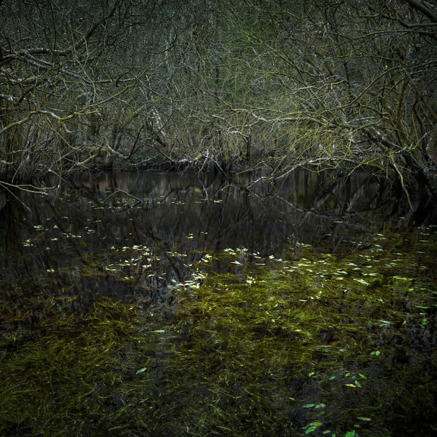 ellie-davies-wood-photos-05.jpg